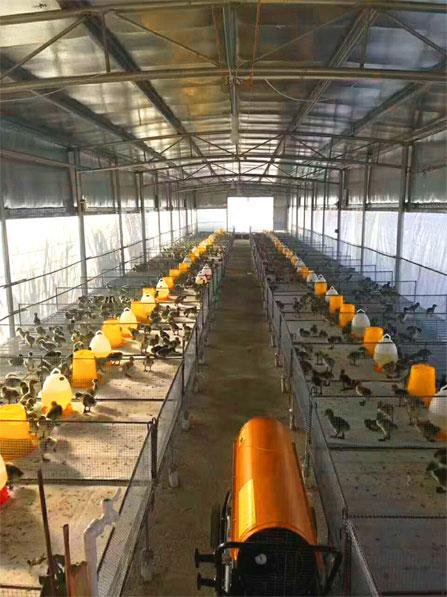 养殖暖风机用来给小鸡取暖非常的好